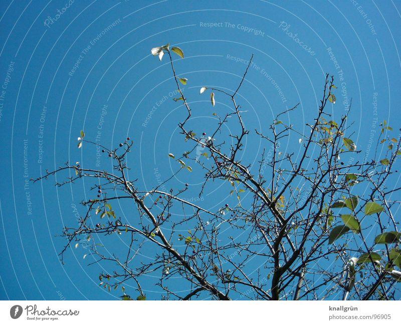 Himmel + Erde Baum grün Geäst Blatt Frühling Sommer Pflanze ruhig Natur blau Ast Aussicht Sky Zweig Schönes Wetter Blick schön Knallblau