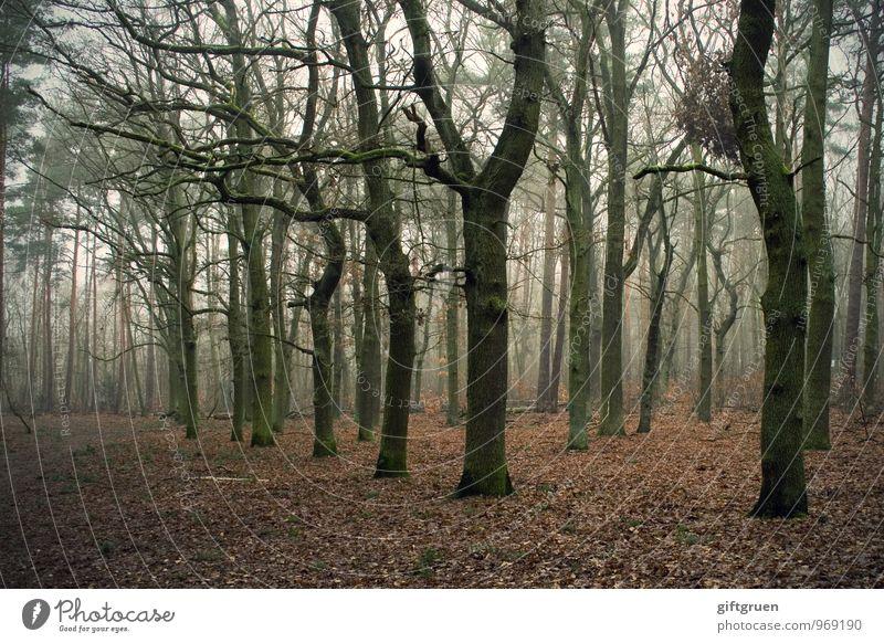 winterwald Umwelt Natur Landschaft Herbst Winter Pflanze Baum Blatt Wald dunkel gruselig trist Endzeitstimmung Vergänglichkeit verlieren Laubbaum karg
