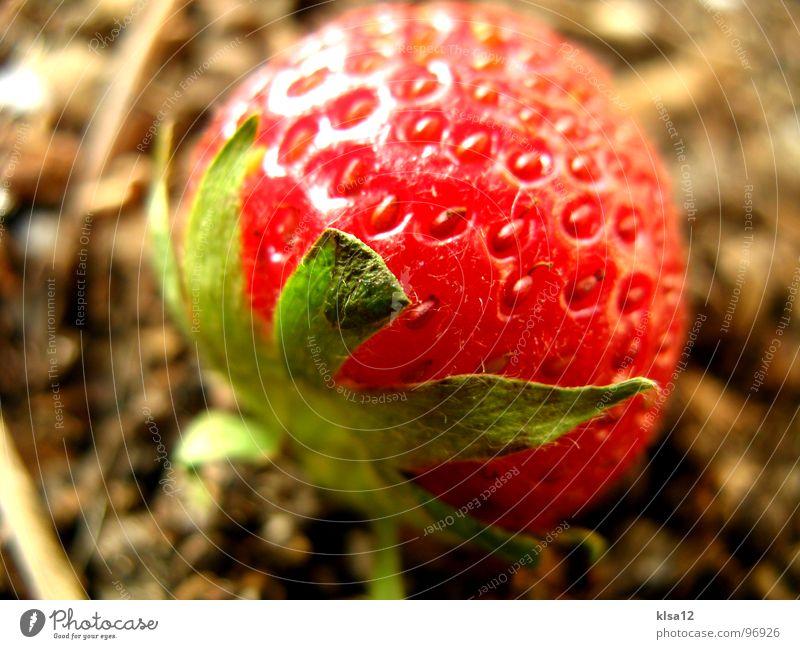 Strawberry grün Frucht Erde süß Gastronomie Punkt Stengel lecker Geschmackssinn fruchtig
