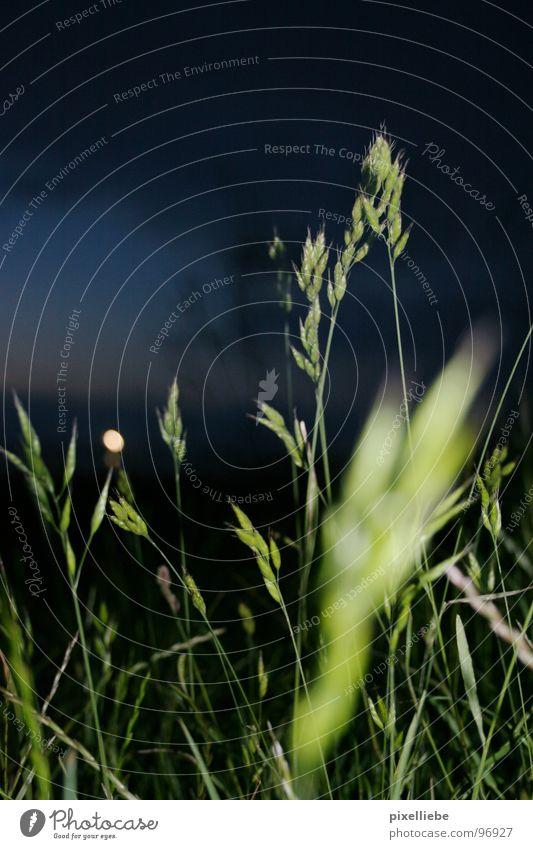 Fernlicht Himmel grün Wolken dunkel Wiese Gras Deutschland Wind Horizont Verkehr Sturm Leuchtturm