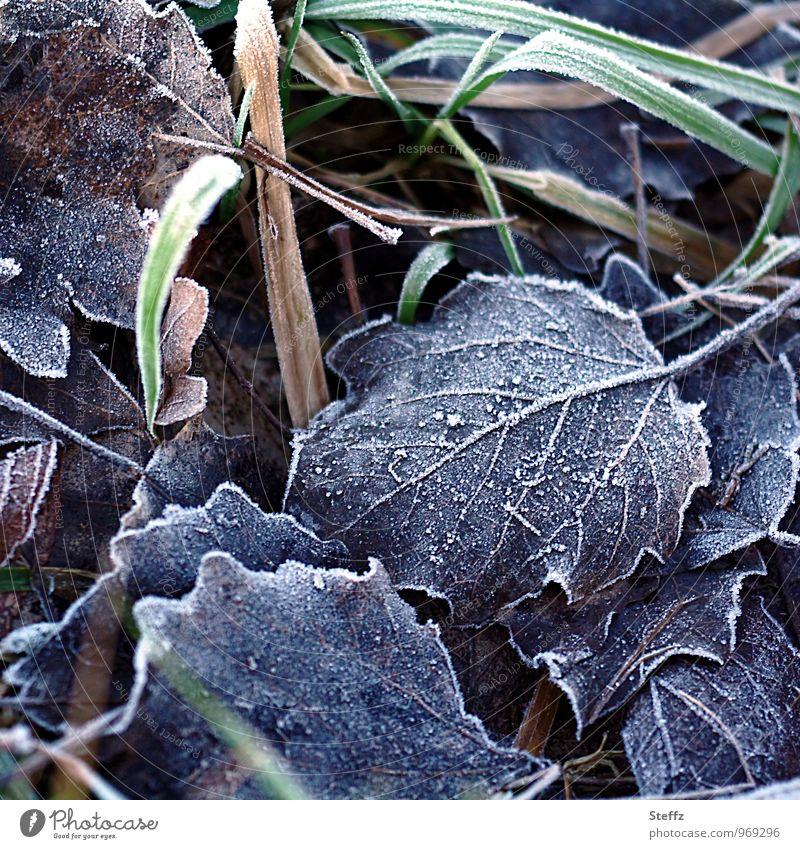 Winterblätter Natur Pflanze Eis Frost Gras Blatt Winterblatt Buchenblatt Blattadern Halm kalt Winterstimmung Vergänglichkeit Raureif Dezember Januar Februar