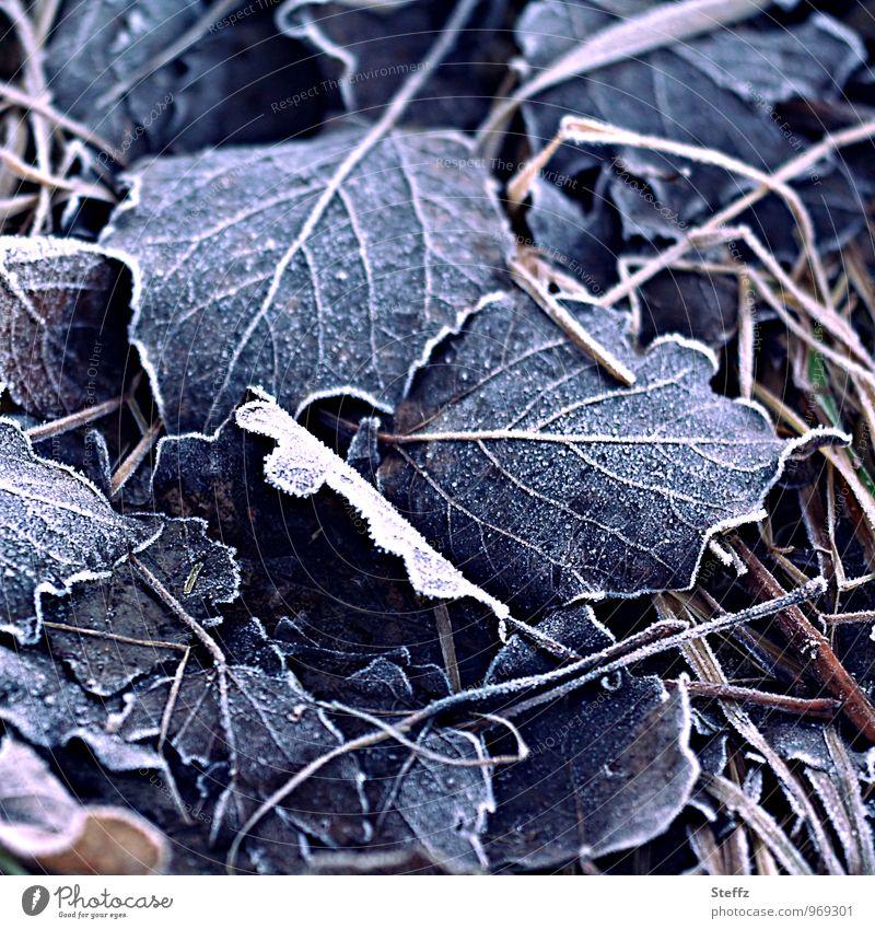 bitterkalt Natur Pflanze schön Blatt Winter Gras Eis Vergänglichkeit Frost gefroren Ende frieren Nostalgie Blattadern Raureif