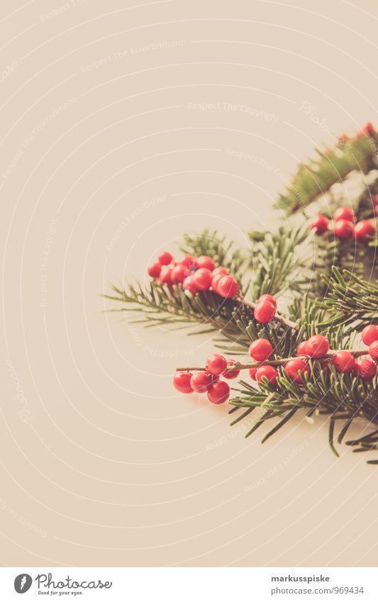 weihnachts decoration stechpalme Pflanze Weihnachten & Advent grün rot Blatt Gefühle Blüte Stil Feste & Feiern Lifestyle Wohnung Häusliches Leben elegant