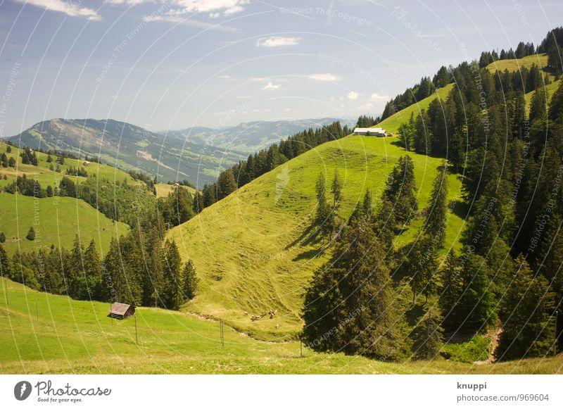 Hanglage Umwelt Natur Landschaft Pflanze Luft Himmel Wolken Sonne Sonnenlicht Sommer Schönes Wetter Wärme Baum Gras Wiese Feld Alpen Berge u. Gebirge Gipfel