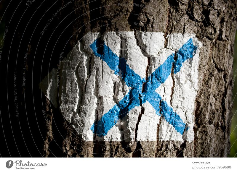 X Ausflug Abenteuer Expedition wandern Umwelt Natur Pflanze Schönes Wetter Baum Baumrinde Garten Park Wald Zeichen Ziffern & Zahlen Schilder & Markierungen