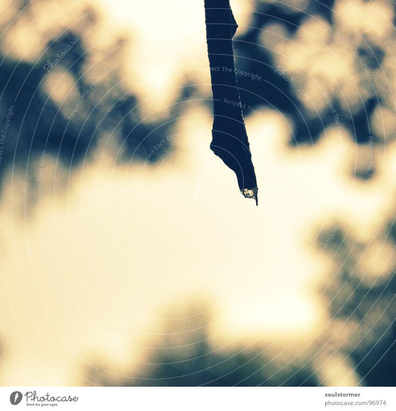 gleich fällt er... Regen nass Baum schwarz grau braun stagnierend Erwartung Tiefenschärfe Unschärfe Makroaufnahme Nahaufnahme Wassertropfen Gewitter Ast Himmel