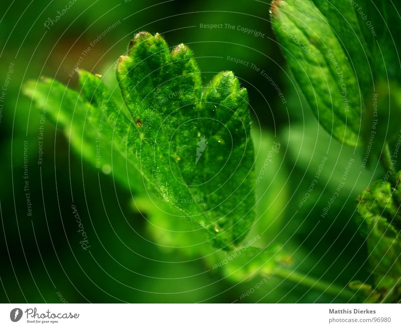 GROWING Blatt Baum Blume Pflanze grün Beleuchtung schimmern Wachstum frisch dezent Unschärfe atmen Luft Balkon Sommer Herbst Jahreszeiten Wetter Natur neu Salat