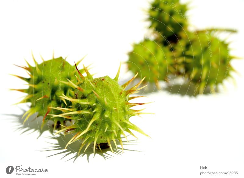 Marshmallow vom Mars grün Sommer gelb Herbst Angst frisch bedrohlich rund Spielzeug Panik Vorsicht stachelig Stachel stechen außerirdisch Maronen