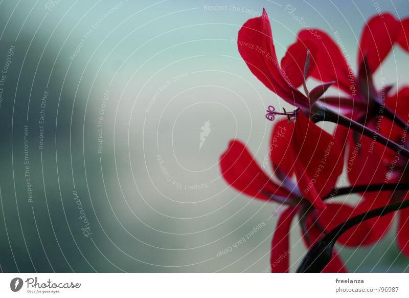 Flowerpower Blume Pflanze rot grün schwarz Blumenkasten blau Natur