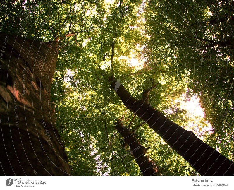 the forest Umwelt Natur Landschaft Pflanze Sommer Wetter Schönes Wetter Baum Blatt Grünpflanze Wald Dach stehen Wachstum ästhetisch bedrohlich dunkel hell hoch