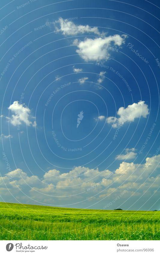 Himmel und Erde Himmel weiß grün blau Wolken Gras Landschaft Feld Erde Bauernhof Getreide Amerika Halm Weizen ländlich Ähren