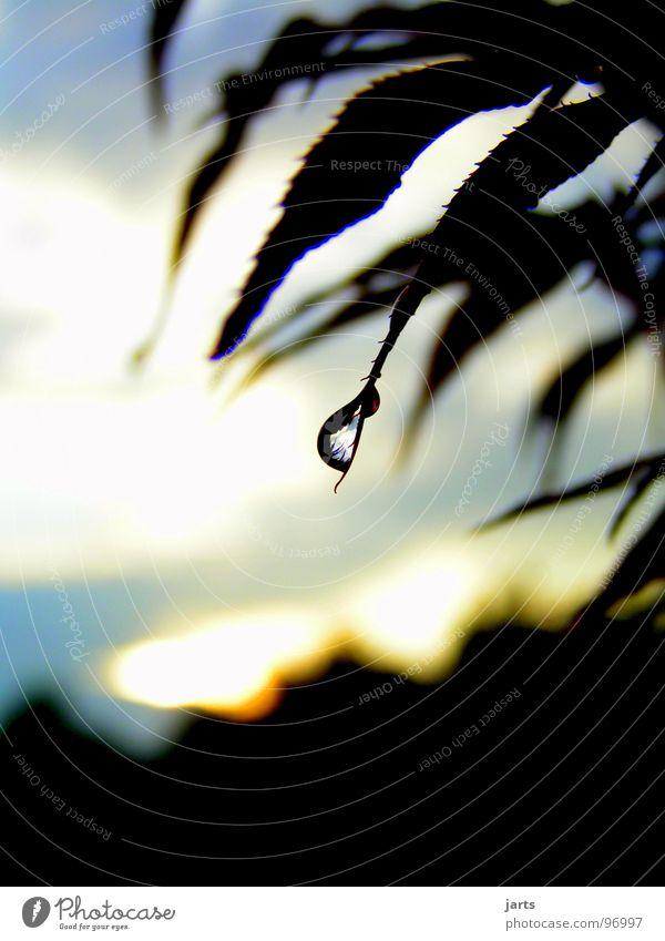 Nach dem Regen Wasser Himmel Baum ruhig Regen Wassertropfen Gewitter Abenddämmerung