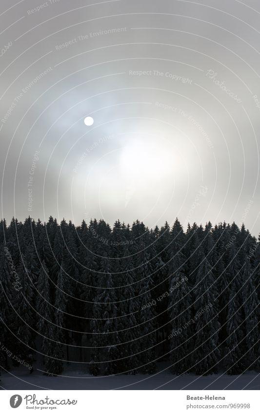 Trübe Tage Erholung ruhig Meditation Winter wandern Natur Landschaft Wolken Sonne schlechtes Wetter Baum Wald Schwarzwald dunkel trist blau grau schwarz trüb