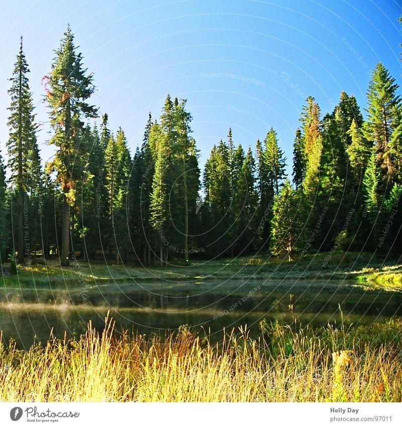 Mein erster Frost See Morgen Baum Wald Gras Nebel Yosemite NP Nationalpark kalt USA Wasser Smoke on the water blau Blauer Himmel