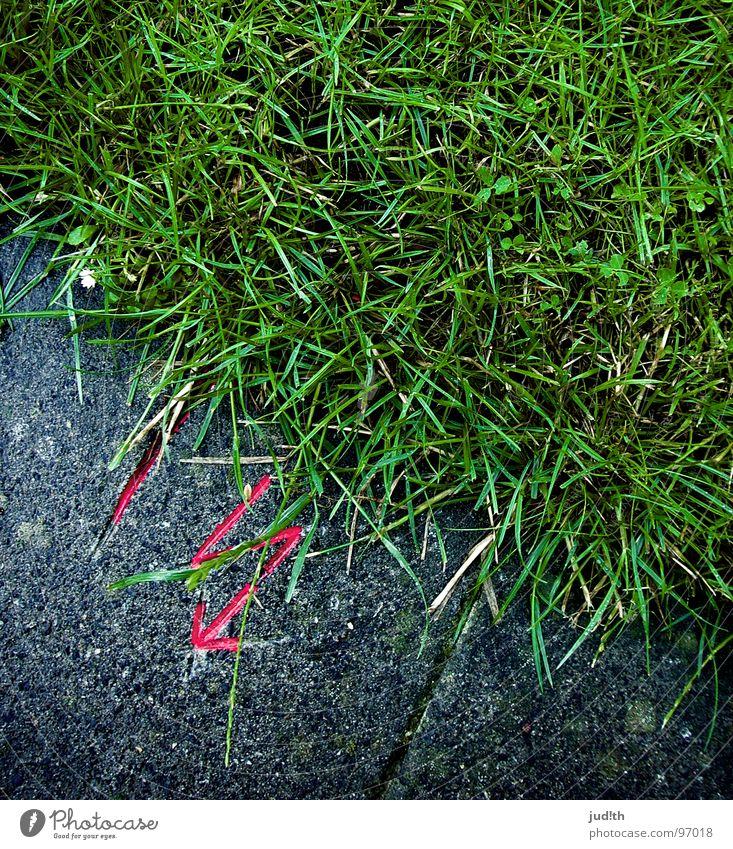 Gewitter mit Regen nass rosa grün grau Wiese Beton gefährlich Elektrizität Warnhinweis Warnschild Wasser Wetter Stein Rasen Garten bedrohlich Respekt Kontrast