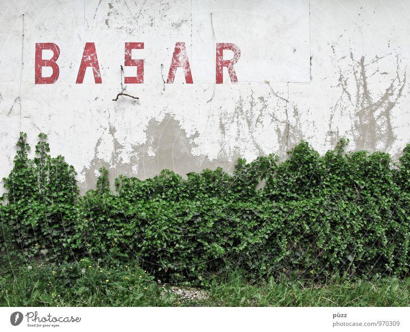 BASAR Umwelt Natur Pflanze Sträucher Efeu Blatt Grünpflanze Wildpflanze Dorf Kleinstadt Haus Ruine Bauwerk Gebäude Mauer Wand Fassade Stein Zeichen