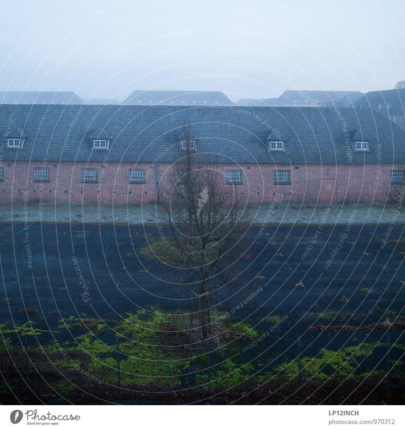 Täglich grüßt diese Aussicht. I alt blau Baum Winter kalt Fenster Architektur Gebäude grau Fassade Nebel trist Dach retro historisch Bundesadler