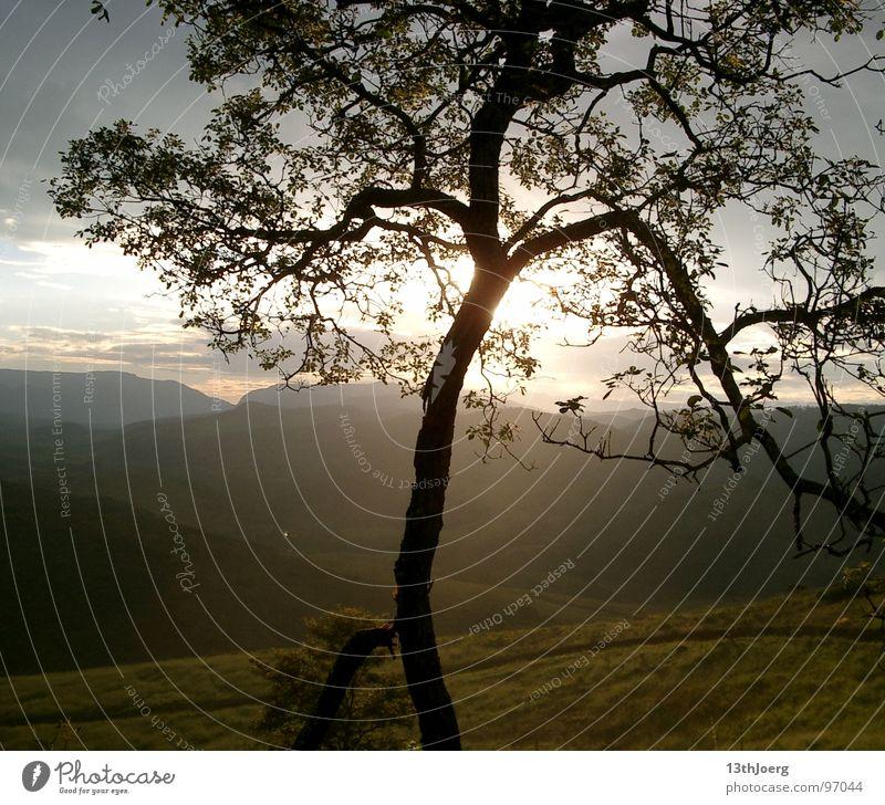 BaumTraum Brasilien Südamerika Fernweh Horizont Sehnsucht Hügel Aussicht Sommer Umwelt Natur Campos Himmel Ferien & Urlaub & Reisen Tal Landschaft Abend