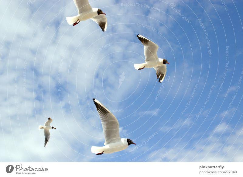 Fly up to the sky III Himmel weiß Meer blau Sommer Strand Ferien & Urlaub & Reisen Wolken Erholung Freiheit See Luft Beine Zufriedenheit braun Vogel
