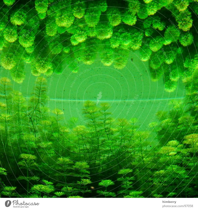 fishtank III Aquarium Pflanze Zoo Algen grün Spiegel Reflexion & Spiegelung Meer Fisch Seaworld Aquazoo Wasser gree