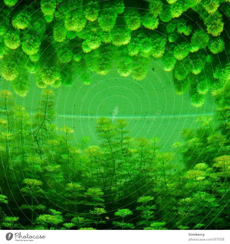 fishtank III Wasser Meer grün Pflanze Fisch Spiegel Zoo Aquarium Algen