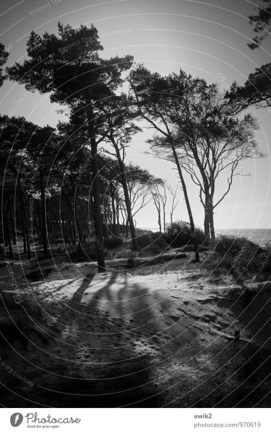 Strandlage Himmel Natur Ferien & Urlaub & Reisen Pflanze Baum Landschaft Umwelt Küste Holz Sand Horizont Zusammensein Wetter Idylle Wachstum Wind