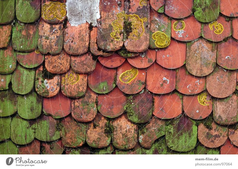 moosdach alt Haus Fenster Holz Stein Hintergrundbild Dach Fliesen u. Kacheln verfallen Backstein Hütte Pilz Dachfenster Flechten Pfannendach