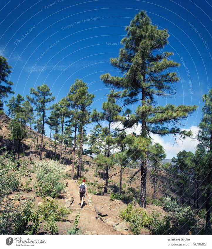 Explore the unexplored! Mensch Kind Natur Ferien & Urlaub & Reisen Jugendliche 18-30 Jahre Wald Erwachsene Berge u. Gebirge feminin Wege & Pfade