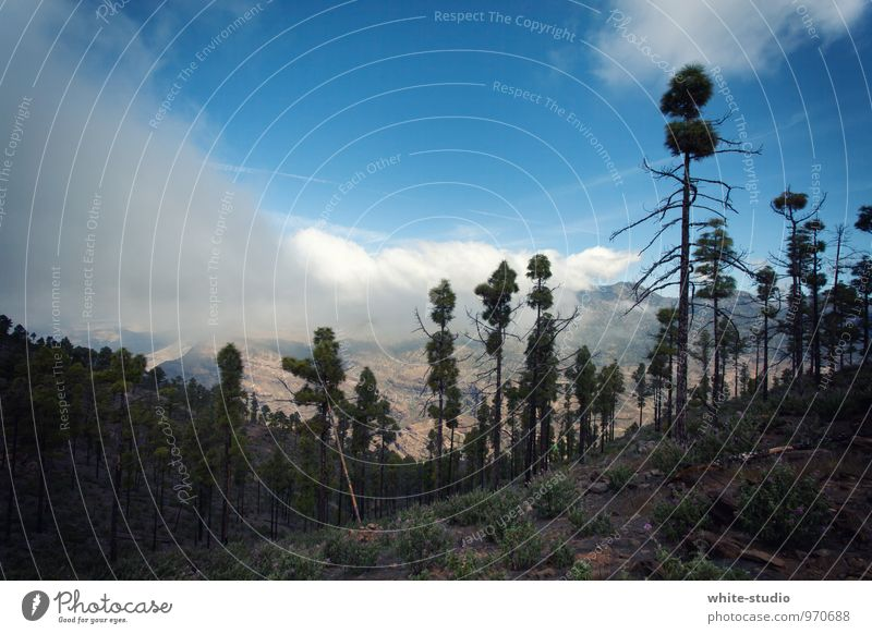 Weisser Rauch Natur Landschaft wandern Waldlichtung Waldsterben Waldrand Waldspaziergang Waldboden sommerlich Sommer Nebel Wolken Wolkenwand Wolkenband