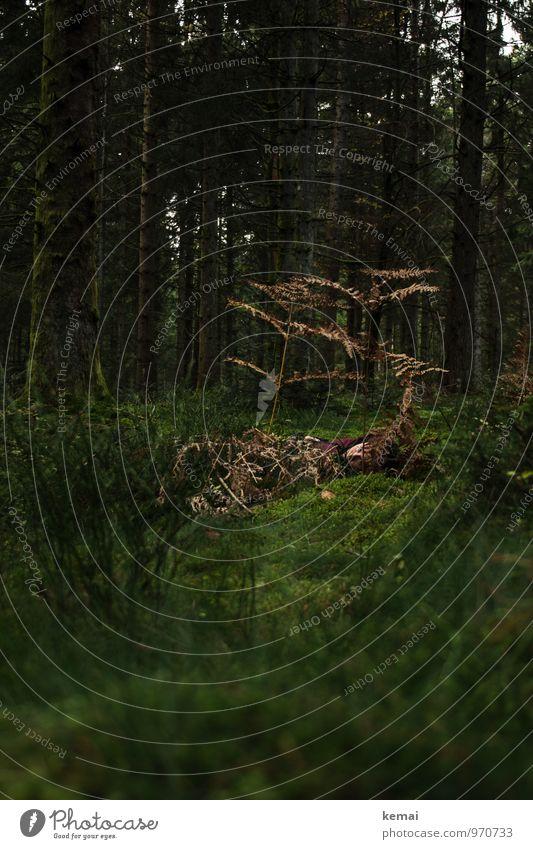 Darkness Mensch Frau Erwachsene Leben Kopf 1 Umwelt Natur Pflanze Urelemente Baum Wildpflanze Farn Moos Moosteppich Baumstamm Wald liegen außergewöhnlich dunkel