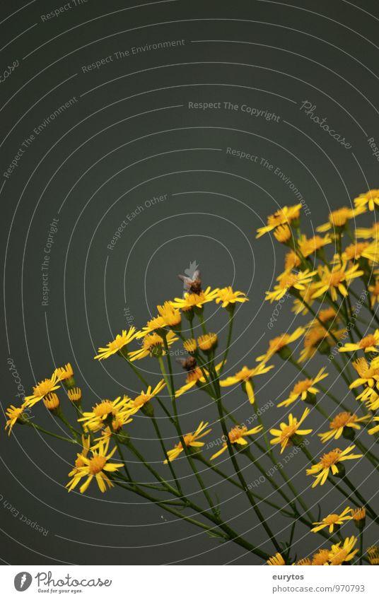 Blütezeit Natur Pflanze Sommer Erholung Blume ruhig Tier Umwelt gelb Leben Wiese Gesundheit Garten Park Klima