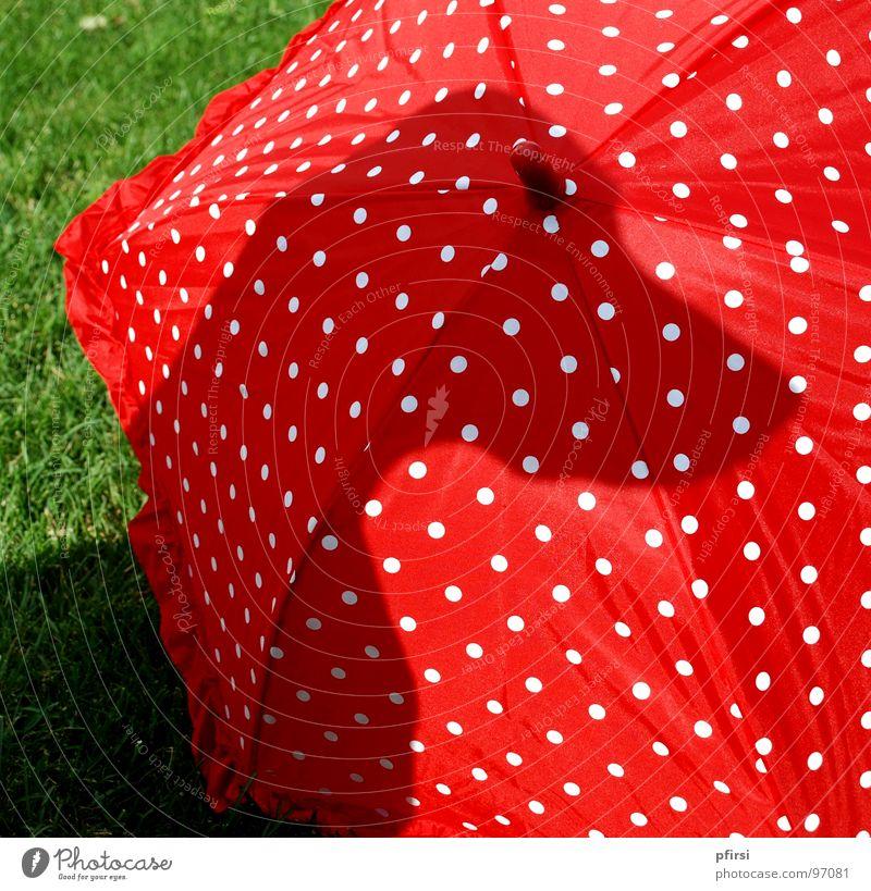 Dalmatiner einmal anders weiß rot schwarz Auge Wiese Hund Punkt Regenschirm Säugetier Selbstportrait
