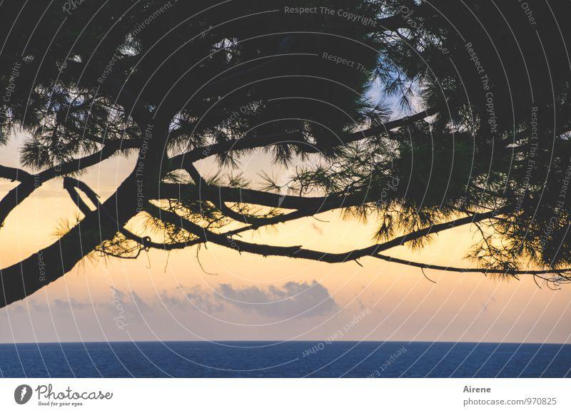 Matinée Natur Landschaft Baum Pinie Nadelbaum Meer Adria positiv blau gold schwarz Beginn Idylle Farbfoto Außenaufnahme Menschenleer Textfreiraum unten