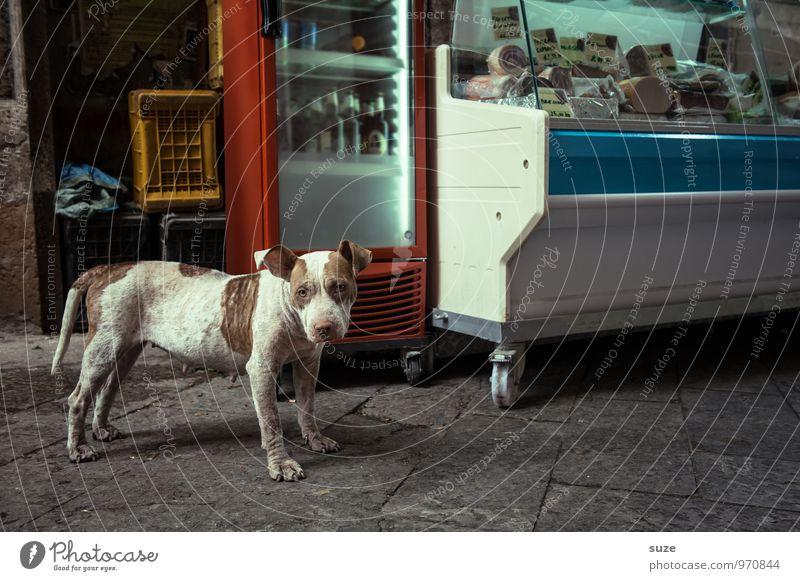 *3.100* Wurstfachverkäuferin Wurstwaren Stil Ferien & Urlaub & Reisen Städtereise Stadt Altstadt Straße Hund stehen warten authentisch dreckig frisch lustig