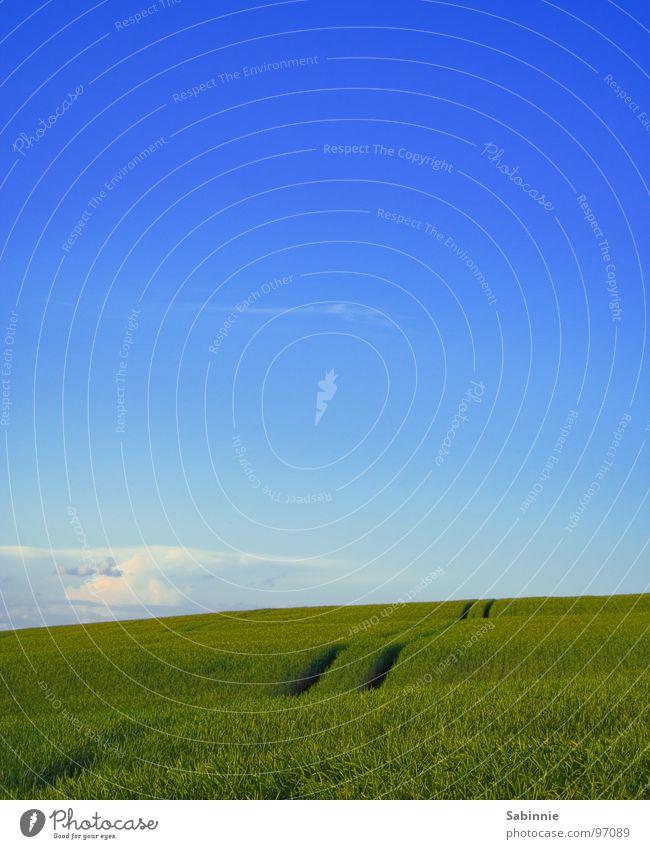 A Place Called Home Wolken Feld grün Weizen Kornfeld Weizenfeld Ähren Halm Landwirtschaft Himmel Erde blau Getreide Landschaft Amerika