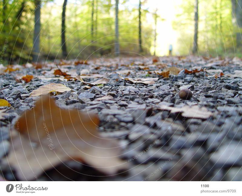 Waldweg Fußweg Blatt Herbst unten Licht Baum Verkehr Straße Bodenbelag Stein