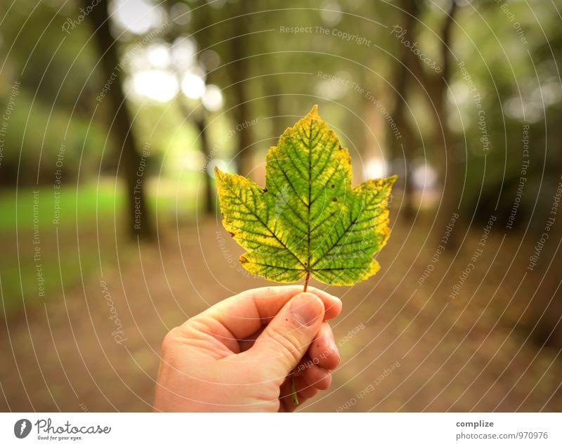 Vergänglichkeit Natur Pflanze grün Baum Hand Blatt Landschaft Wald Umwelt gelb Wiese Wege & Pfade Garten braun Park gold
