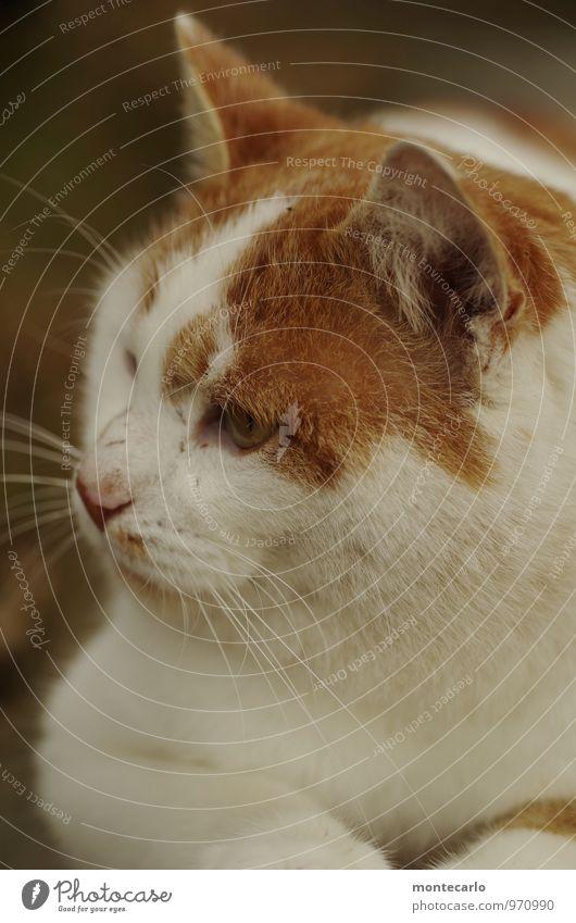 da drüben gibts was Katze Natur weiß Tier Umwelt natürlich braun wild Zufriedenheit Wildtier authentisch Spitze einzigartig Freundlichkeit dünn Fell