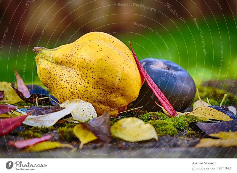Stillleben - Herbst - Obst Lebensmittel Frucht Quitte Birne Apfel Ernährung Lifestyle Gesundheit Natur Schönes Wetter Blatt Baumstumpf Moos Herbstlaub Garten