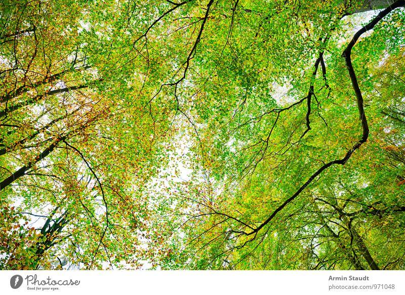 Herbst - Wald Natur schön grün Baum ruhig Ferne Umwelt gelb natürlich außergewöhnlich Stimmung Wachstum wild Kraft