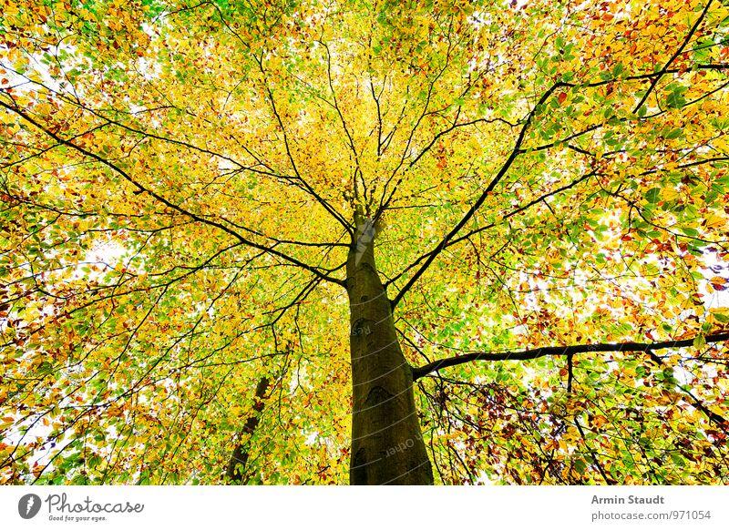 Baumkrone Natur Pflanze grün Ferne Wald gelb Herbst natürlich außergewöhnlich hell Stimmung orange Wachstum Kraft authentisch
