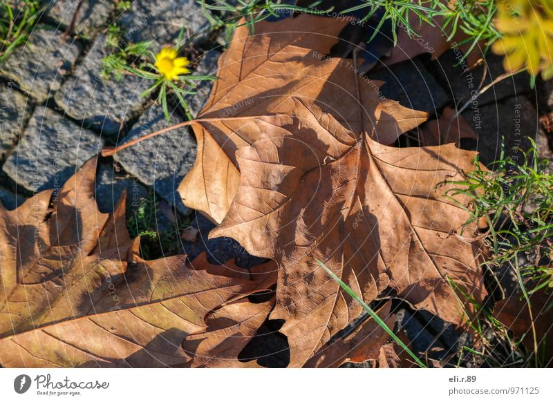 herbstlicher Farbkleks Pflanze grün Blatt Umwelt gelb Herbst Blüte braun authentisch beobachten trocken