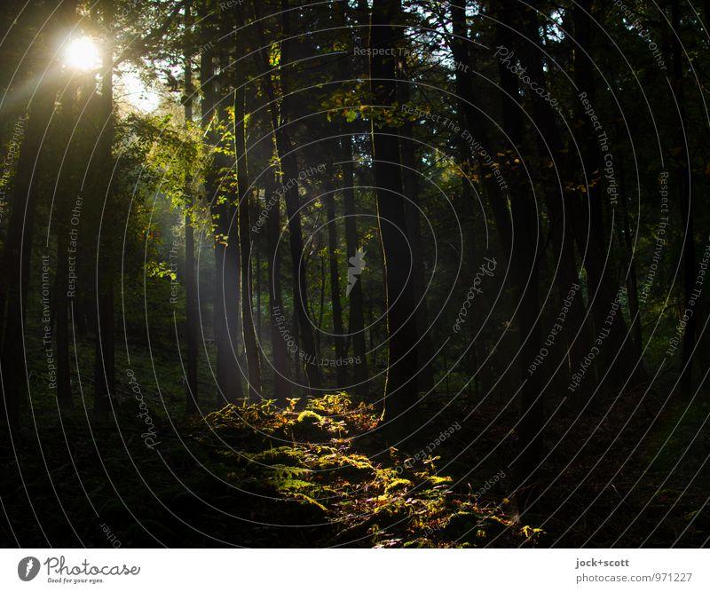fränkische Blöße Glück ruhig Ausflug Sommer Sträucher Wildpflanze Waldlichtung Waldboden Franken authentisch positiv Klischee Wärme trösten Wachsamkeit Weisheit