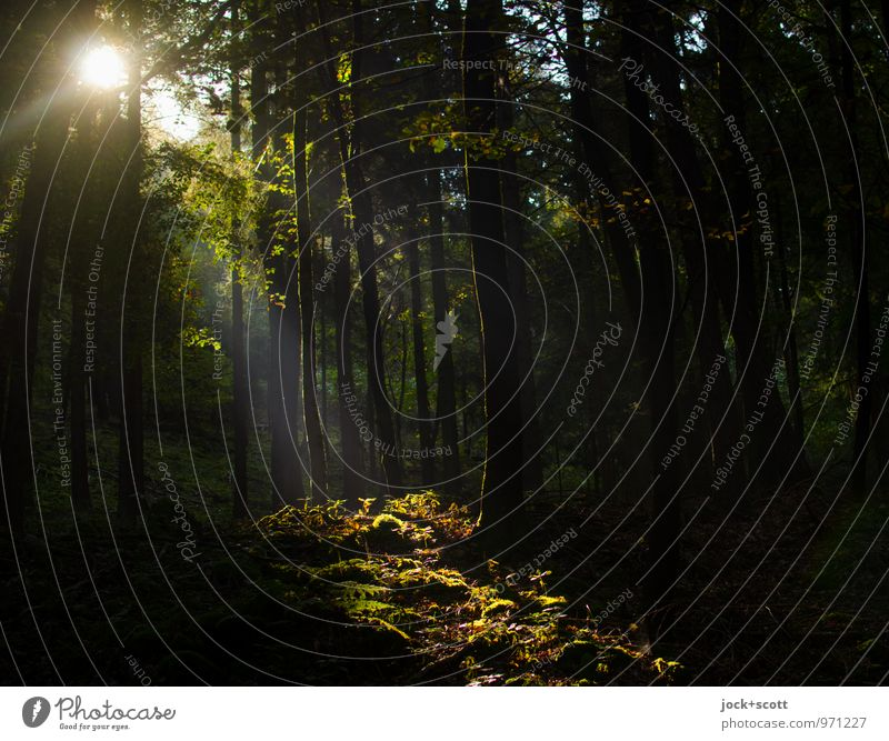 fränkische Blöße Sommer Sträucher Wildpflanze Waldlichtung Waldboden Franken authentisch Klischee Wärme Idylle Kitsch Naturschutzgebiet Zauberwald Schatten