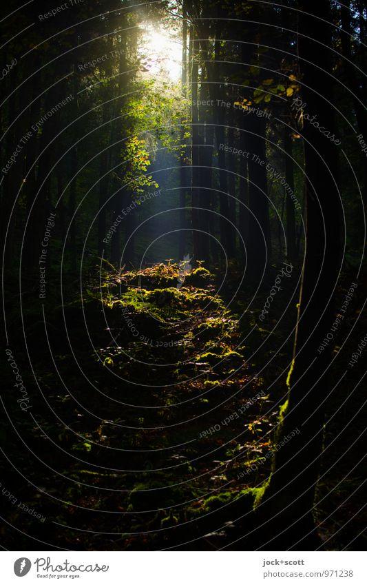 fränkische Flur Natur Erde Schönes Wetter Baum Wald Waldboden Franken Klischee Wärme ruhig Idylle Kitsch Lichteinfall Zauberwald Lichtspiel Schatten Silhouette
