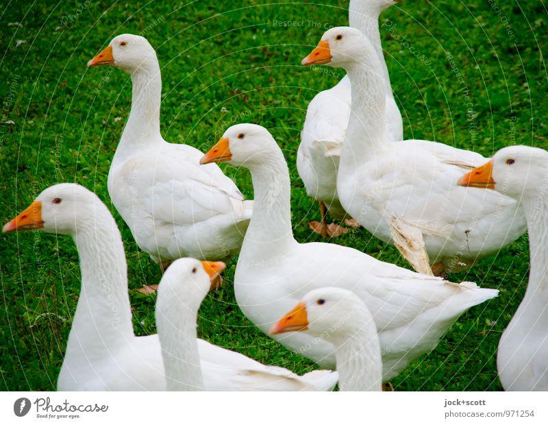 unter Beobachtung! grün Farbe Leben Wiese natürlich Gesundheit Zusammensein authentisch stehen warten beobachten Kommunizieren Neugier Glaube Vertrauen