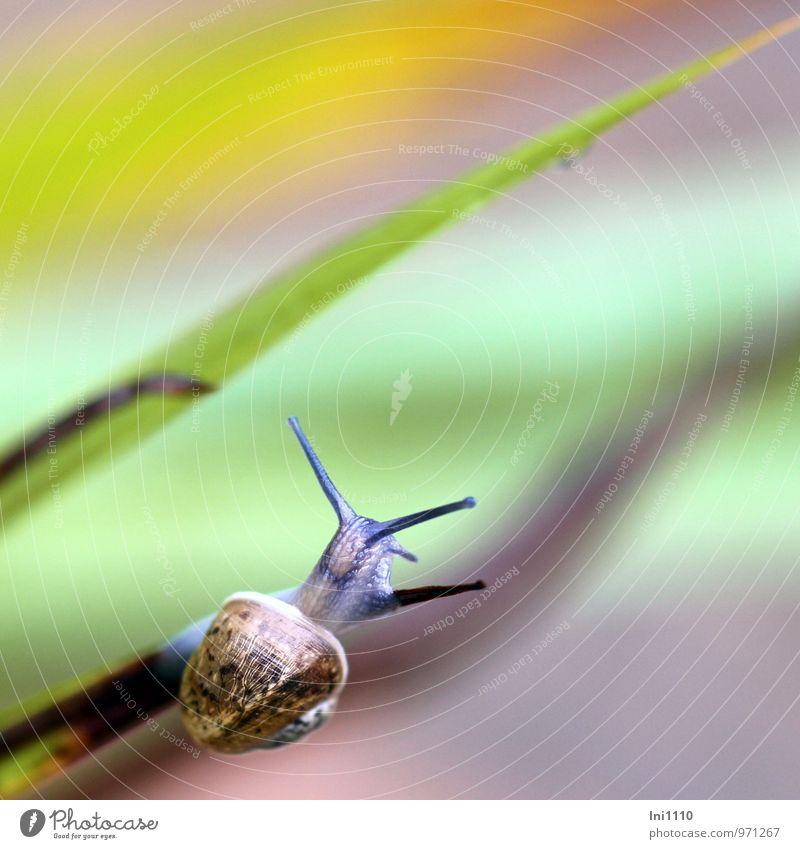 kleine Schnecke Pflanze Tier Sonne Wetter Blatt Wildpflanze Garten Wildtier Weinbergschnecke 1 schön natürlich schleimig blau braun mehrfarbig gelb grau grün
