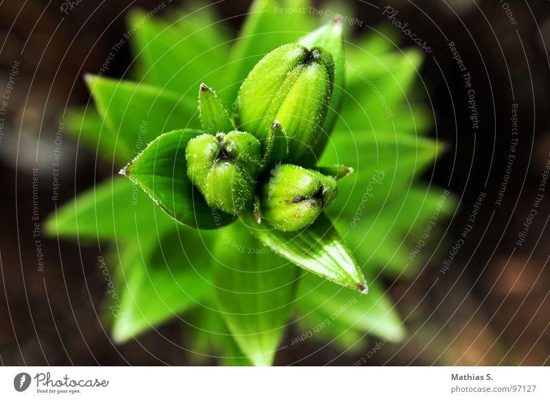 20.15 Uhr Blume mehrfarbig Pflanze Einsamkeit Tentakel schwarz grün Blütenpflanze Dreieck 3 sprießen Trauer emotionslos Bundesland Tirol Österreich Sommer