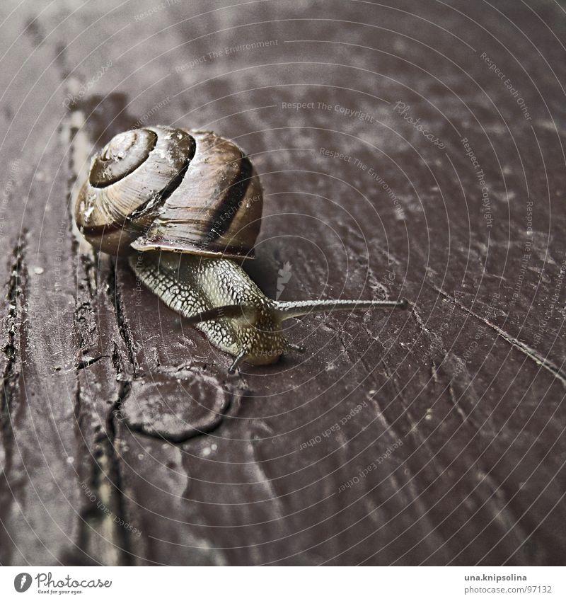 schnegge Tier Holz Wohnung Spaziergang Mobilität Schnecke krabbeln Lack langsam schleimig Wohnmobil Schneckenhaus Astloch trödeln