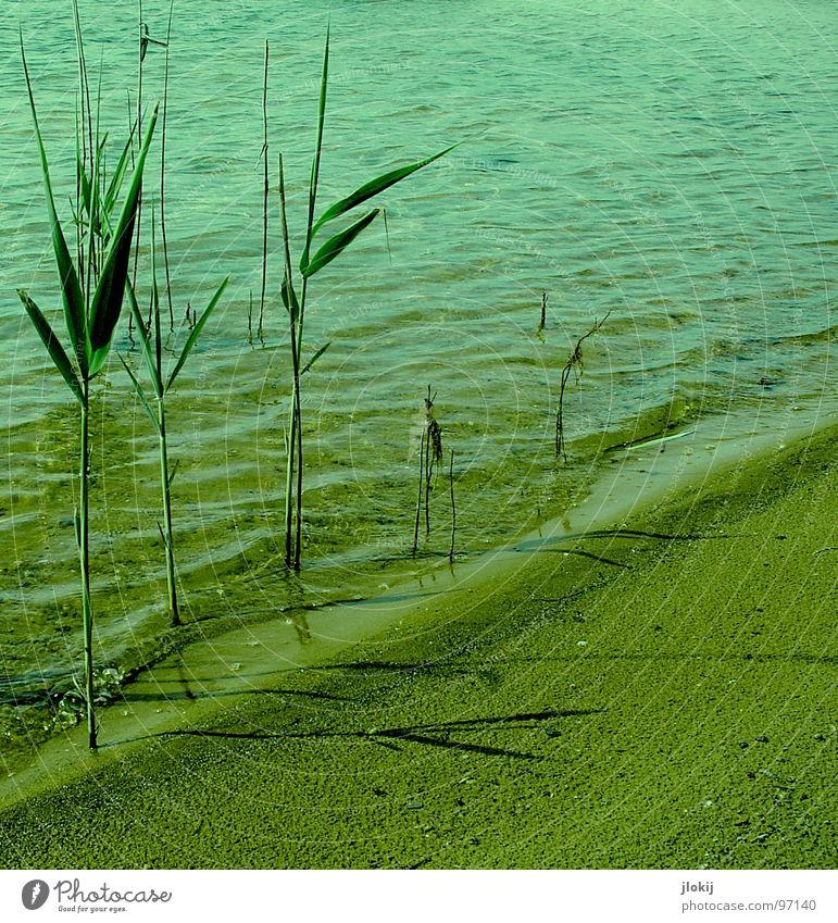 Randerscheinungen Natur Wasser grün Pflanze Sommer Strand Bewegung Stein See Wärme Sand Küste Wellen nass verrückt Wachstum